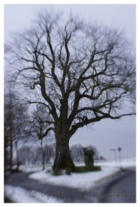 Baum-Meiste